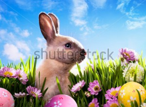 stock-photo-art-baby-easter-bunny-on-spring-green-grass-96857281